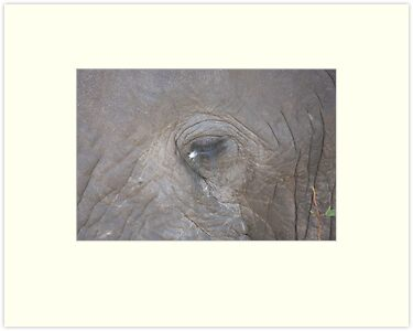 Elephant eye by Jo McGowan