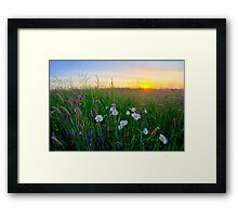 Meadow Sunrise Framed Print