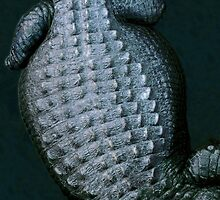 Alligator Skin - Florida by Kent DuFault