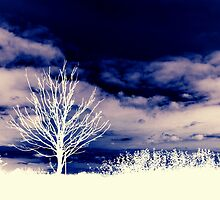 Winter Tree by charlylou