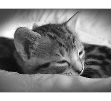 Tribble (Fast Asleep) by MoGeoPhoto