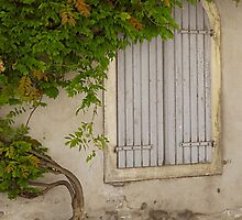 Blue Shutters, green vine by triciamary