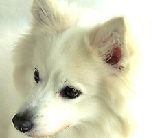 Portrait of Snowball II by BlackSwan