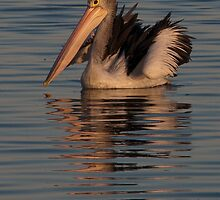 Pelican at Sunset 2 by fotoWerner