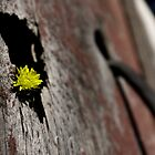 A Wall Flower by Peter Beug