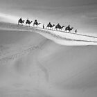 Camels Cross the Dunes by imagesbyjillian