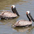 Pelican Pair by ewersphoto