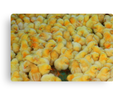Market Series - Don't count your chickens... Canvas Print