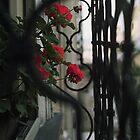 Geraniums on window sill of Hohenburg, Salzburg. by Ilze Coombe