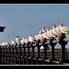 Seagull Parade - New Brighton Merseyside  by Dave Hepworth