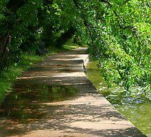 Washington trail by julie101