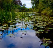 Lily Ponds by Mark Robson