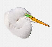 Great Egret In Profile by Delores Knowles