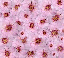 Petals Petals Petals by Bonnie T.  Barry