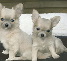 Cute brother and sister puppies. by MayJ