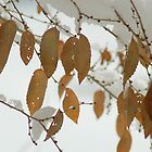 Winter Leaves by Joy King