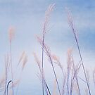 Dance of the Reeds by AnnieD