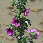 Purple plant by timthetraveller