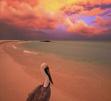 mexican pelican by joel Durbridge