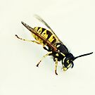 Wasp by inkedsandra