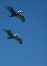 Pelican pair by Larry  Grayam