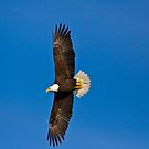 Soaring-Conowingo Dam by BigD