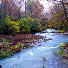 Arkansas Ozark Mountain Stream by NatureGreeting Cards ccwri