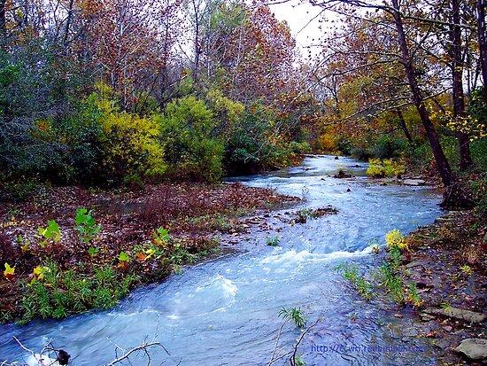 Arkansas Ozark Mountain Stream by NatureGreeting Cards ©ccwri