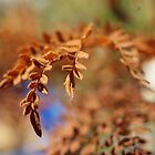 Brown Leaf by Maryanne Lawrence
