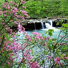 Kings River Falls Dressed In Pink by NatureGreeting Cards ccwri