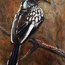 Yellow-Billed Hornbill by Tom Godfrey