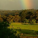Late Light, Otway Farmlands by Joe Mortelliti