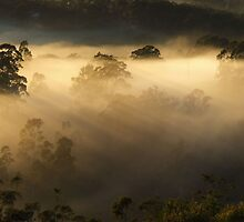 """""""Misty Bliss"""" by debsphotos"""