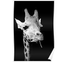black and white giraffe Poster