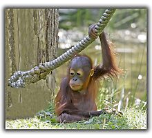 Baby Orang Utan  (Monkey series 5) by John44