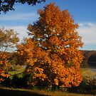 October at the Lake I by Virginia Shutters