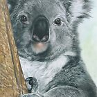 Kool Koala by Samantha Norbury