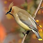 Waxwing Extravaganza by Ken Haley