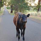 Evening Stroll by Meg Hart