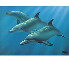 Dolphins Photographic Print