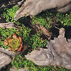 Little Mossy Log by KidLiliefeldt