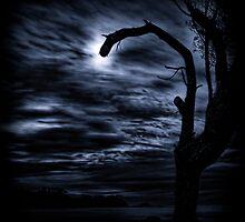 ...light tree moon... by Geoffrey Dunn