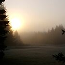 Frost Rising to Meet the Day by Brenda Dow