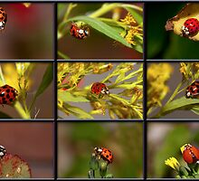 Ladybugs Come A Calling by Bonnie T.  Barry