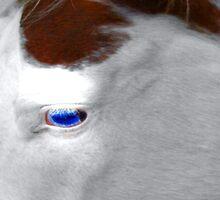 Pinto  Eye by kimbarose
