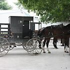 Amish Buggy #1 by Susiejwp