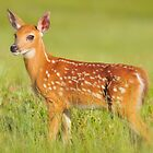 New Born Fawn by joerossbach