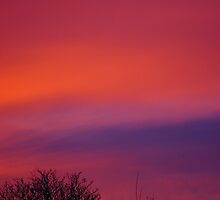 Red Sky At Night #1 by L. Haverkamp