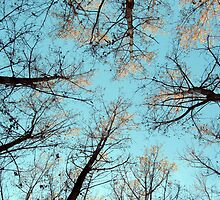 AUTUMN TREES ON BLUE SKY by robertpatrick