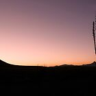 Desert Silhouette by caqphotography